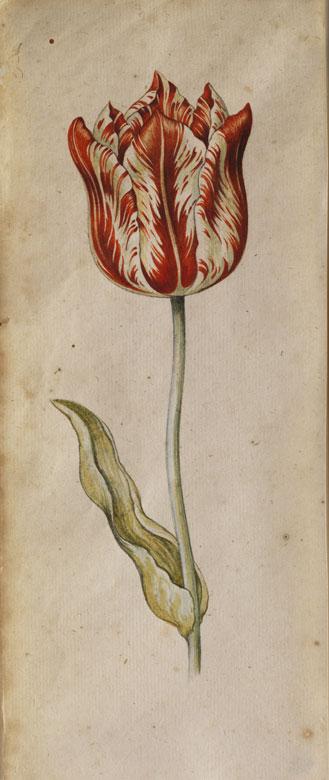 Anthony Claesz I., 1592 Niederlande - 1635