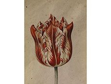 Detail images: Anthony Claesz I., 1592 Niederlande - 1635