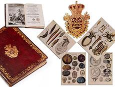 Detailabbildung: † Bibliothek No. 1 Eine große Bibliothek mit 1130 Büchern des 18. Jahrhunderts, Louis XIV und Louis XV.