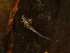 Detail images: Otto Marseus van Schrieck, 1619 Nimwegen - 1678 Amsterdam