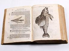 Detail images: Fische - Aldrovandi, U.