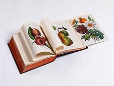 Detail images: Allgemeines Teutsches Garten-Magazin