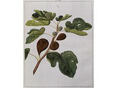 Detail images: Knoop, J. H.