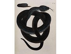 Detail images: 5 Bände mit kolorierten Kupfertafeln