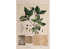 Detail images: Seltenes, japanisches Botanik-Werk mit 60 Tafeln