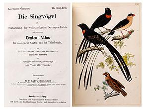 Singvögel auf kolorierten Tafeln