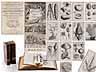 Detailabbildung: Eine dekorative Bibliothek mit mehr als 900 prächtigen Einbänden des 17. und 18. Jahrhunderts A decorative library with more than 900 sumptuously bound books from the 17th and 18th centuries