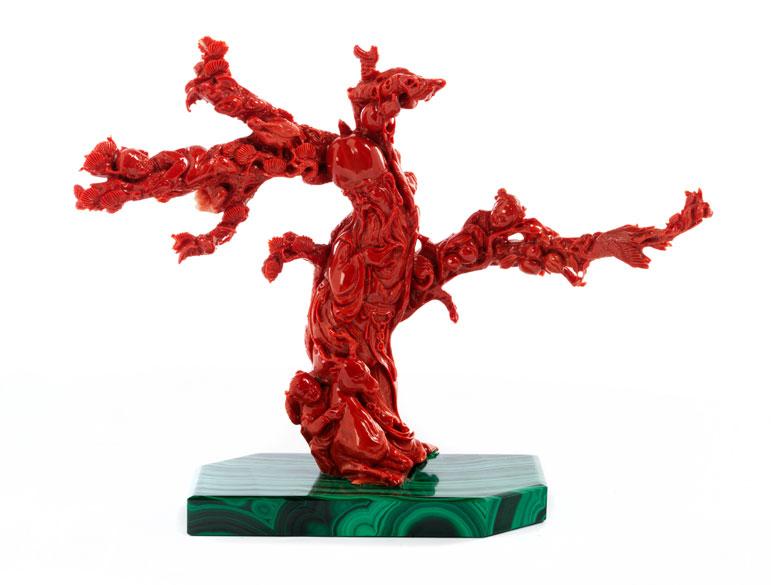 Roter Korallenbaum