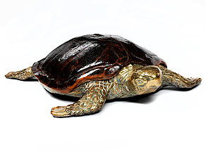Kombinationsarbeit einer Schildkröte