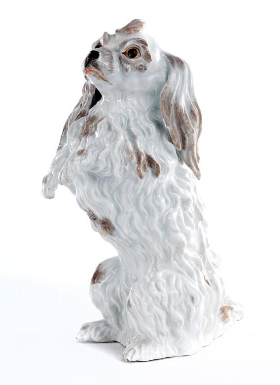 Meissener Bologneser -Hund