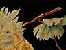 Detail images: Giovanna Garzoni, 1600 Ascoli – 1670 Rom