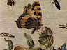 Detailabbildung: Jan van Kessel, 1641 – 1680