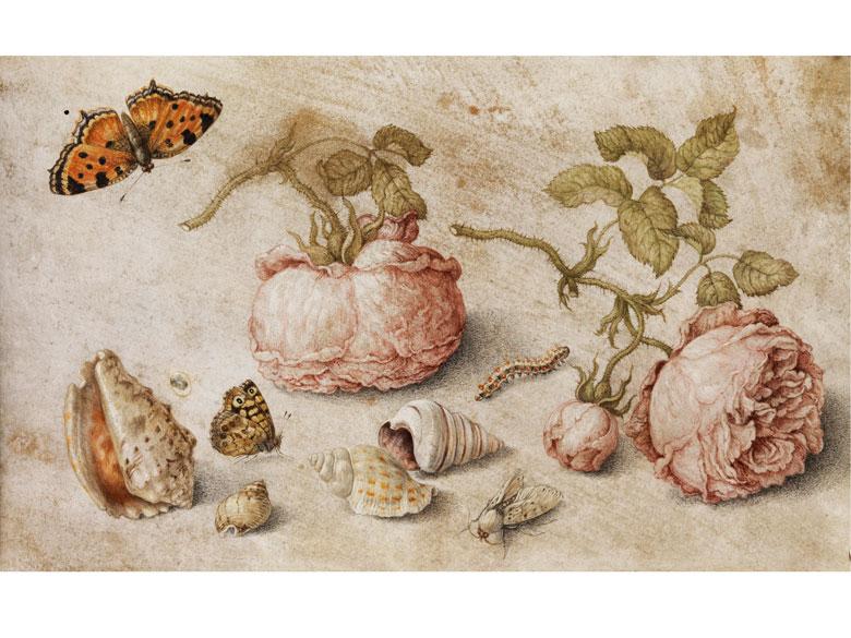 Jan van Kessel, 1626 – 1679, zug.