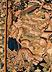 Detail images:  Großer Wandteppich mit Darstellung einer Wolfsjagd