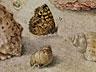 Detail images:  Jan van Kessel, 1626 – 1679, zug.