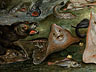 Detail images:  Jan van Kessel, 1626 – 1679