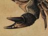 Detail images: Georgius Hofnagel 1542 – 1600, Umkreis