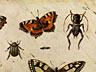Detailabbildung: Jan van Kessel d. Ä., 1626 – 1679