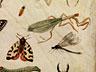 Detail images: Jan van Kessel d. Ä., 1626 – 1679