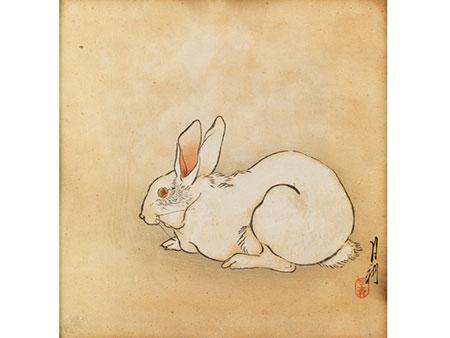 Weißer Hase mit bernsteinfarbenen Augen
