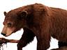 Detail images:  Tierpräparat-Gruppe