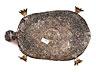 Detail images: Schildkröte