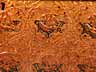 Detail images: Äußerst seltene, prachtvolle Truhe mit Pastiglia-Dekor